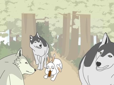 オオカミの基礎知識