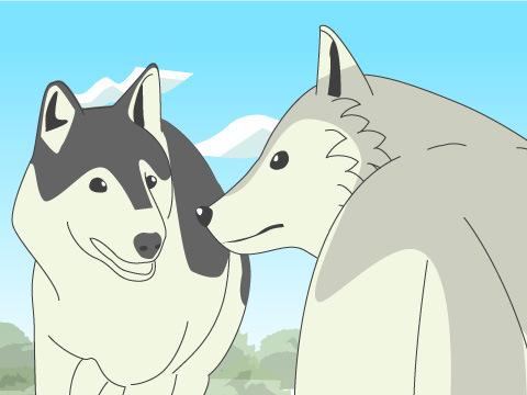 オオカミの素顔