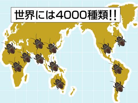 世界に4,000種類もいると言われているゴキブリ
