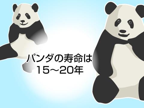 パンダの寿命は?