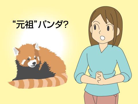 実は、元祖パンダは「レッサーパンダ」