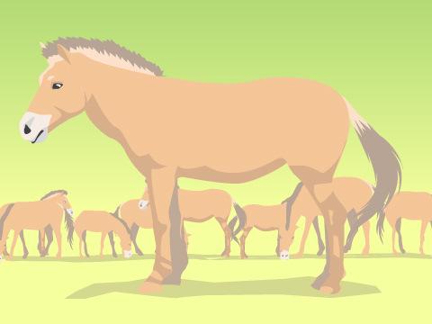 野生馬の姿を色濃く残す「モウコノウマ」