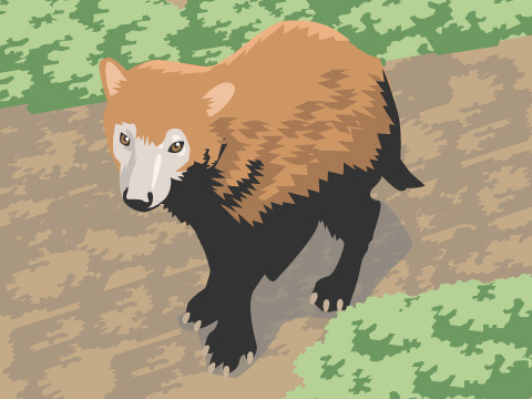 原始的な野生の犬「ヤブイヌ」