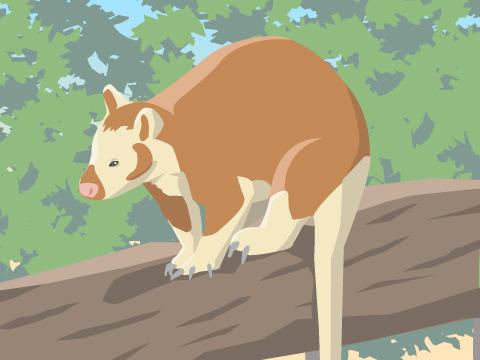 木の上で暮らすカンガルー「セスジキノボリカンガルー」