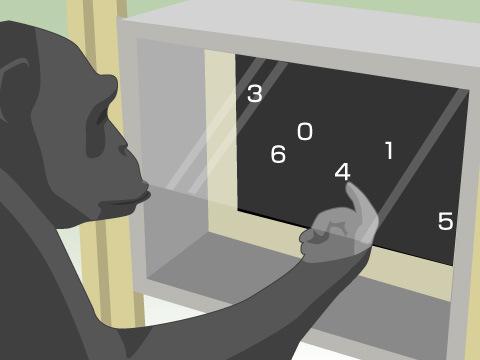 ≪例≫京都市動物園「チンパンジーの認知科学実験の公開」