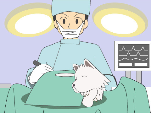 国内初、野生動物初の皮膚移植手術へ