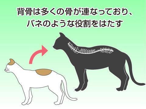 猫背はすぐれた身体能力の秘密?