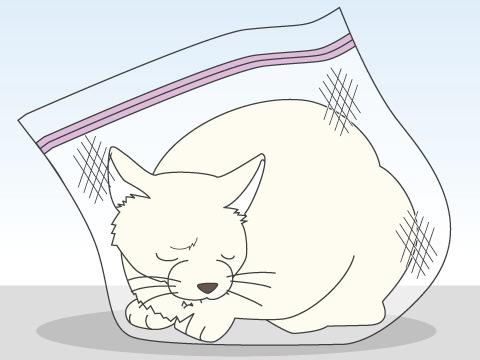 猫の保定法