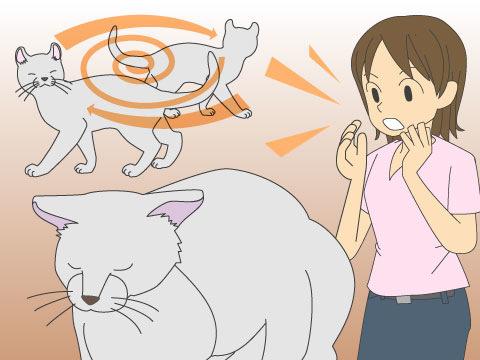 ペットにも起こる認知症