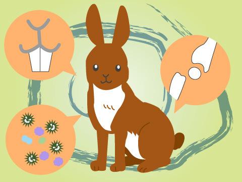 ウサギの病気