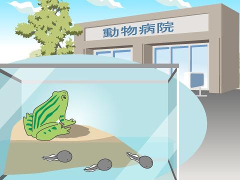 カエルの病気