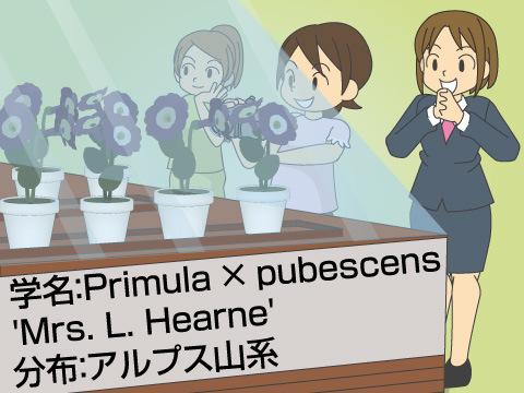 生きた植物を展示する