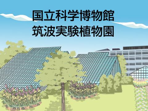 国立科学博物館筑波実験植物園(茨城県つくば市)