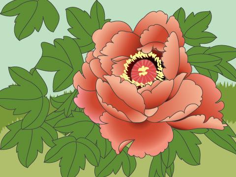 牡丹って、どんな花!?