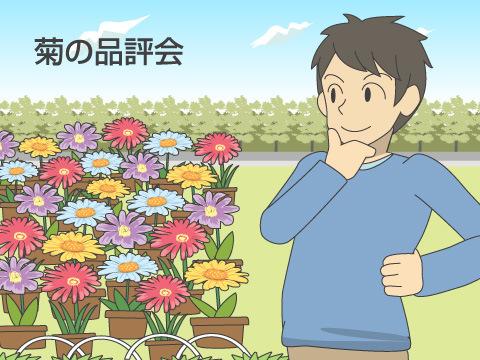 コンテストの元祖は菊の品評会