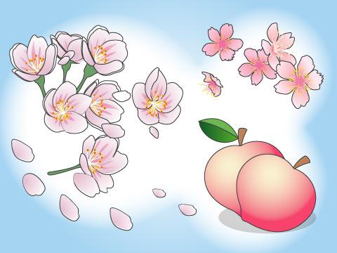 ピンクの花と夏の甘い果実が魅力の「モモ」