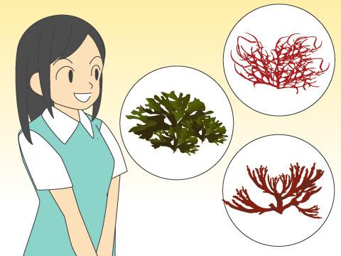 海藻の種類