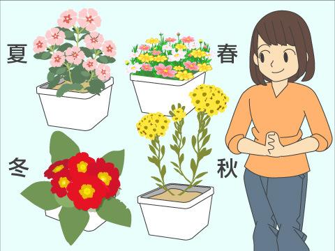 育てやすい植物を選びましょう