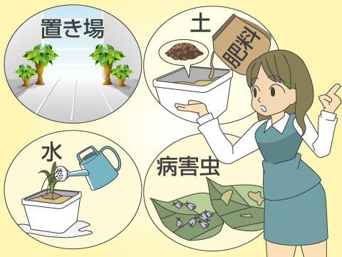 観葉植物の育て方の基本