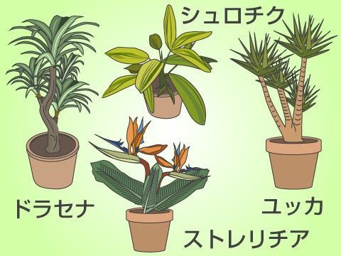 育てやすいおすすめの観葉植物
