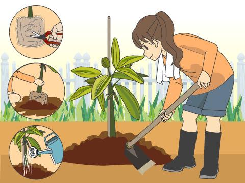 庭木を植えてみよう