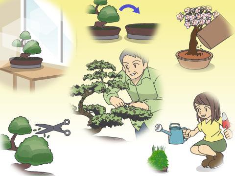 盆栽の手入れ方法