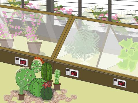 熱帯植物が好む温度帯