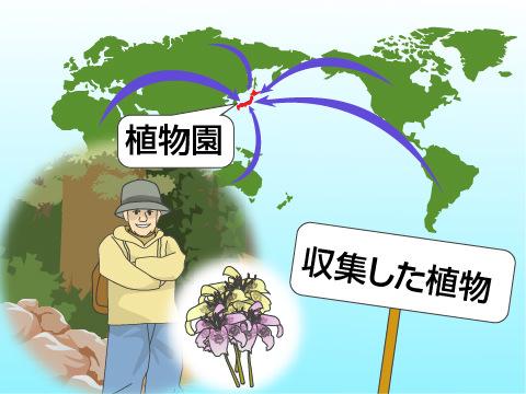 植物を集める