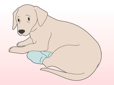 高齢犬の注意点は?