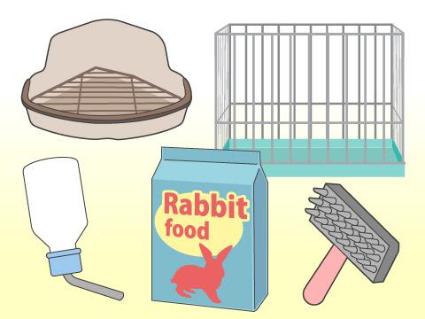 準備するべき飼育用品