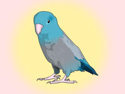 鳥がかかりやすい病気。人にうつる?