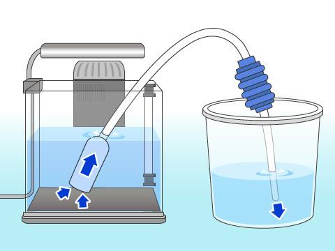 水槽を洗う頻度と水換えを行なう頻度