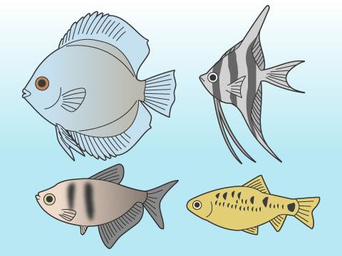 寿命の長い魚は?