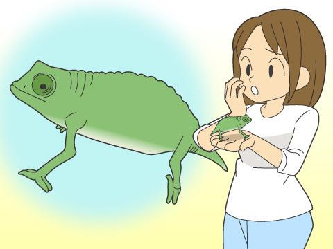 爬虫類を選ぶポイント(2)