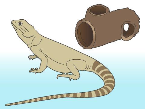 爬虫類にシェルターは必要?