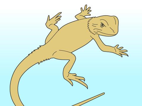 爬虫類はどんな病気にかかるのか?