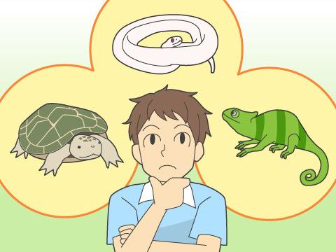 爬虫類はスキンシップがストレスになる?