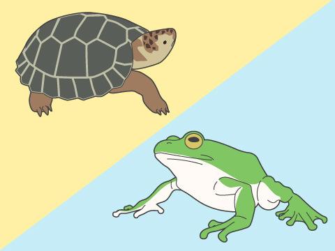 両生類と爬虫類の違い