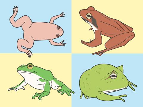カエルの品種