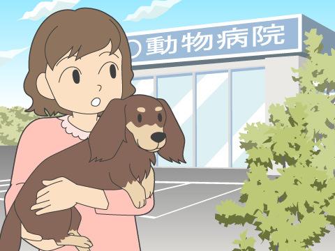 動物病院の活用方法を知りたい