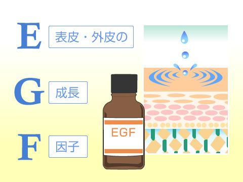 EGF(EpidermalGrowth Factor/細胞再生因子)