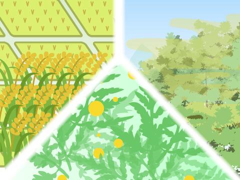 世界三大花粉症
