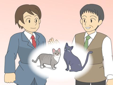 猫付きマンションの特徴と目的