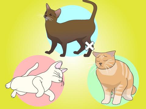 猫が外に出たがるのは防げる?