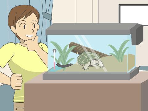 カメやヘビ、イグアナなどの爬虫類