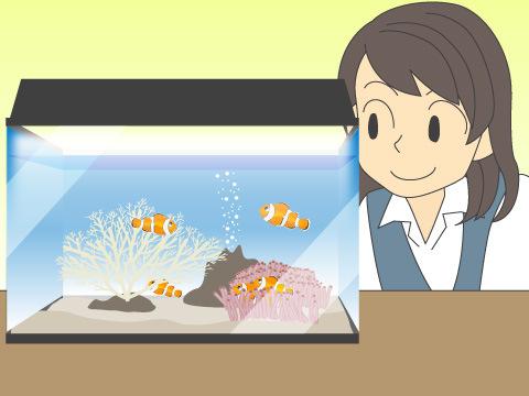 金魚、熱帯魚などのアクアリウム