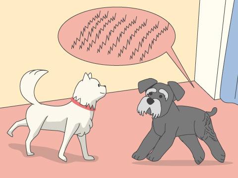 犬を飼う場合