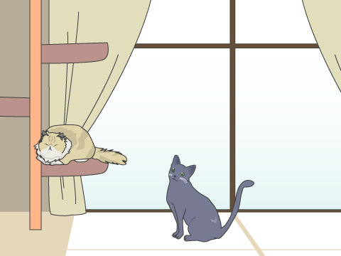 猫を飼う場合