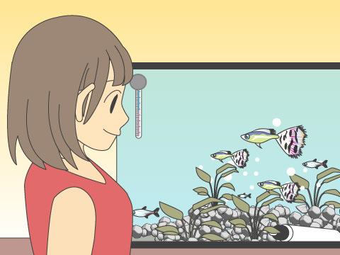 熱帯魚などを飼う場合