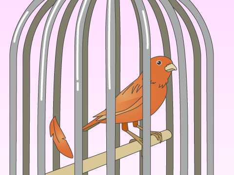 鳥を飼う場合